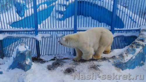 уже 20 лет медведь живёт в обычной семье удивительные кадры